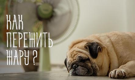 81a4719722eb2 Зоомагазин «Сами с усами» - товары для животных с доставкой - Москва