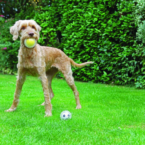 "Rosewood Jolly Doggy Игрушка для собак ""Catch & Play Tennis Ball"""